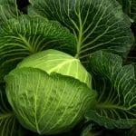 cavoli 1556226231 150x150 - Dieta vegetale