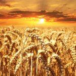 cereali 1556226218 150x150 - Zucchero