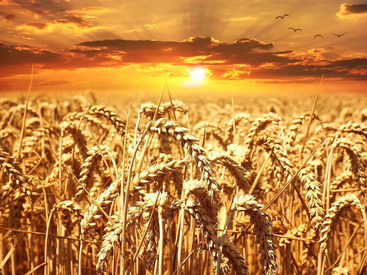 cereali 1556226218 - Dieta macrobiotica