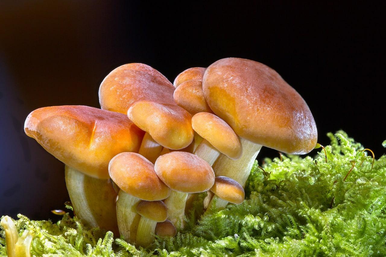 funghi 1556206585 - Perdere peso con i funghi