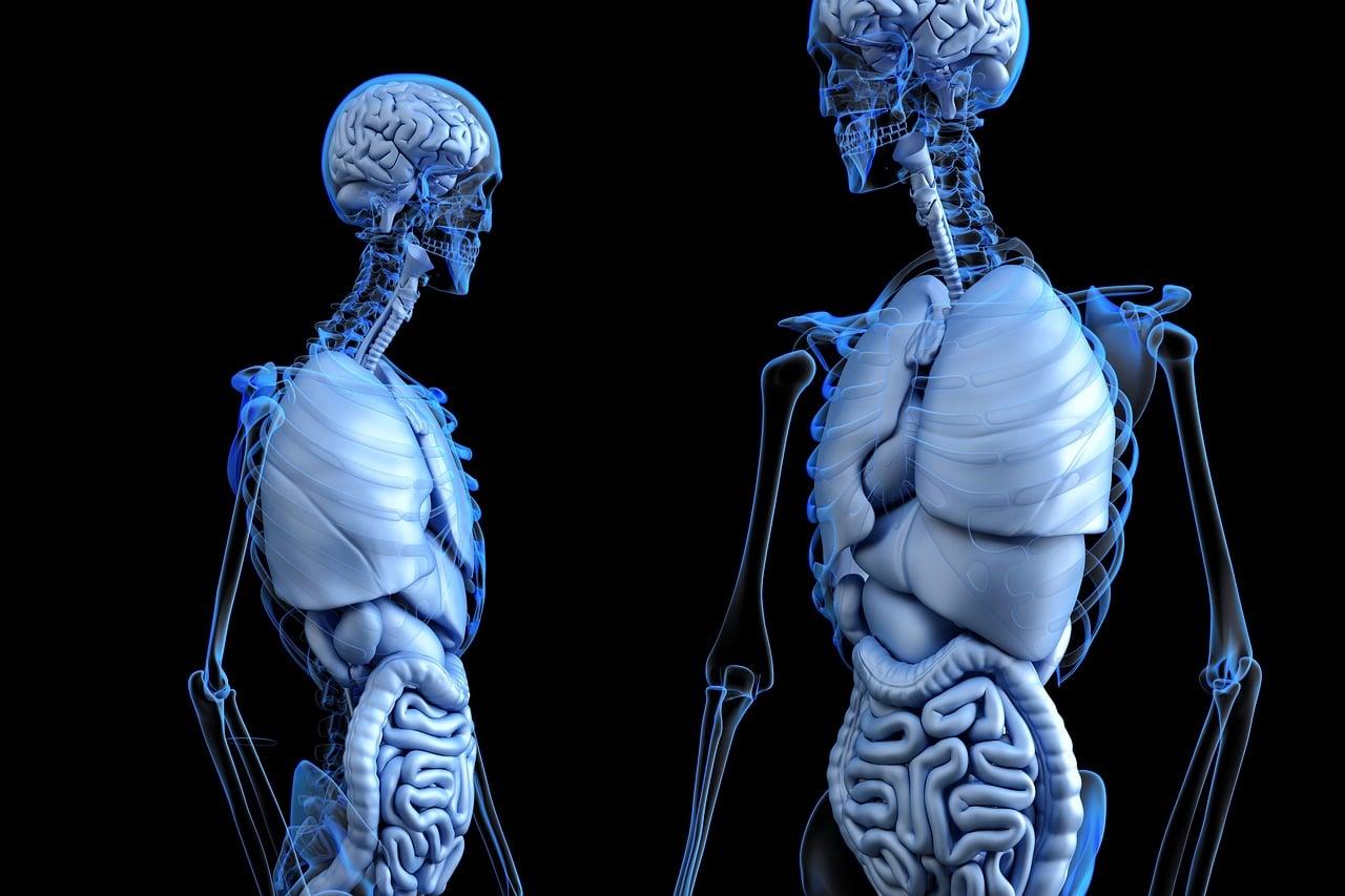 intestino 1556201448 - Gas nel sistema digerente