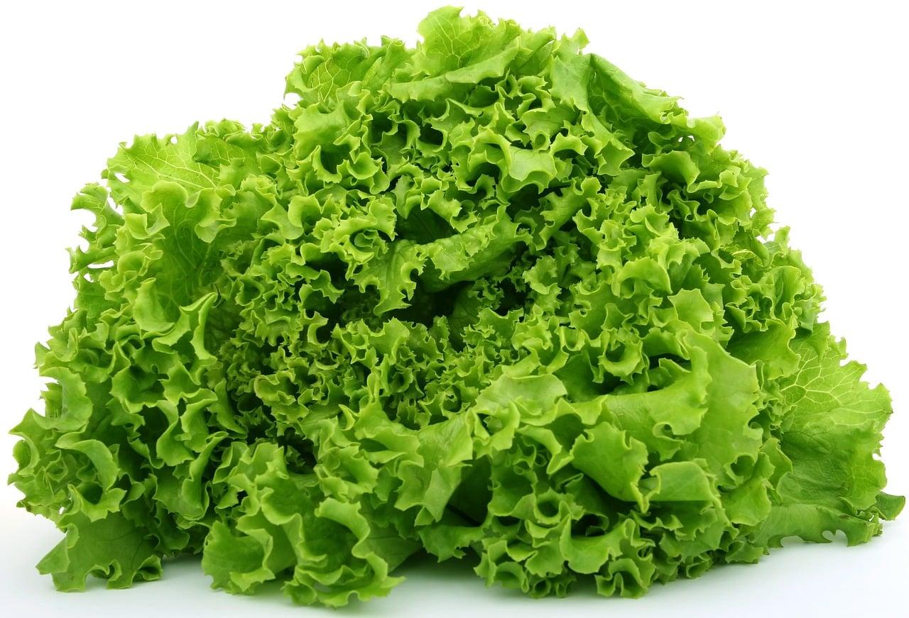 lattuga 1556225349 - Dieta con la Lattuga