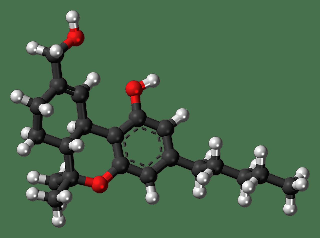 metabolismo 1556205361 - Come attivare il metabolismo