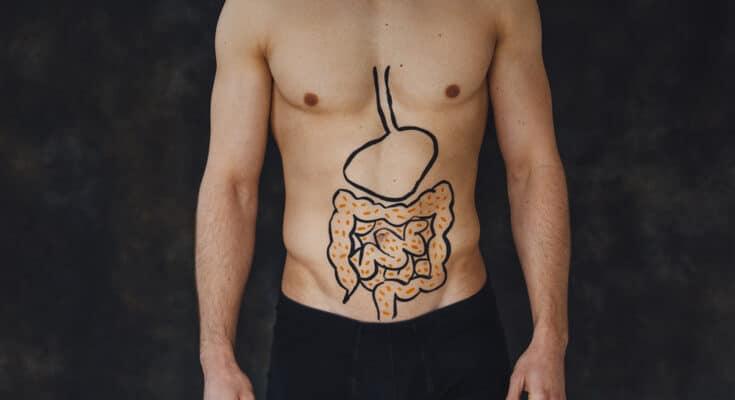 9556 microbiota batteri 735x400 - In che modo la salute umana viene condizionata dal microbiota