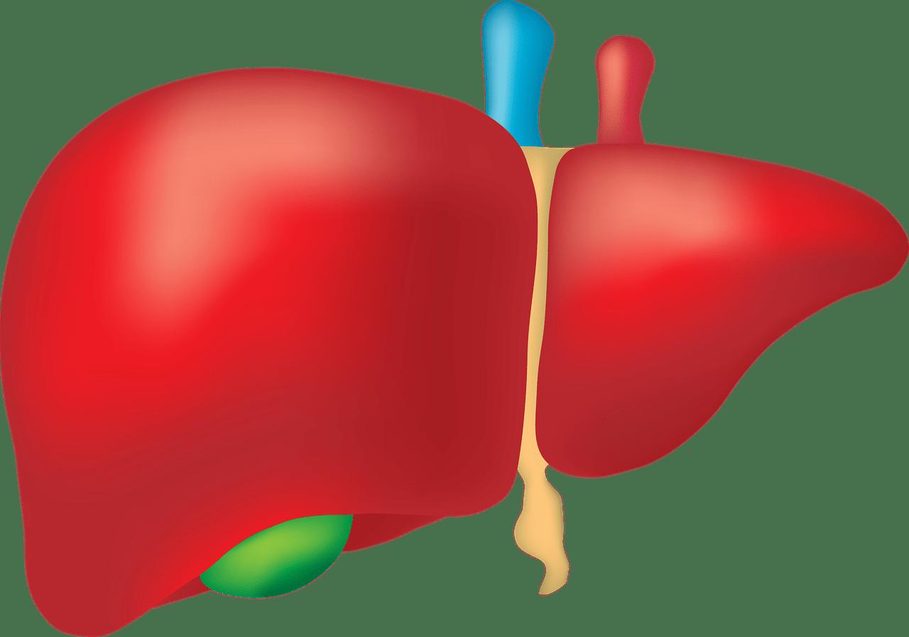 fegato 1625761933 - Dieta per il fegato: cosa mangiare